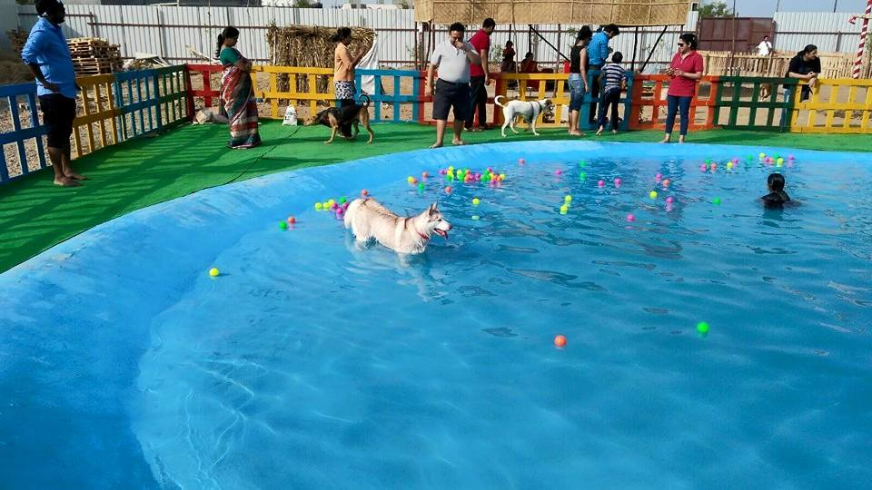 Pune's Peppy Paws Pet Resort Relocates To 60,000 Sq Ft Facility at Wadki