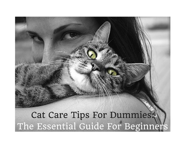 Cat Care Tips For Dummies: The Essential Guide For Beginners