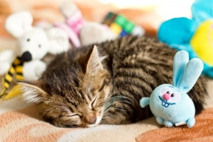 Cats At Play: Cat Toys To Enhance Your Feline's Life