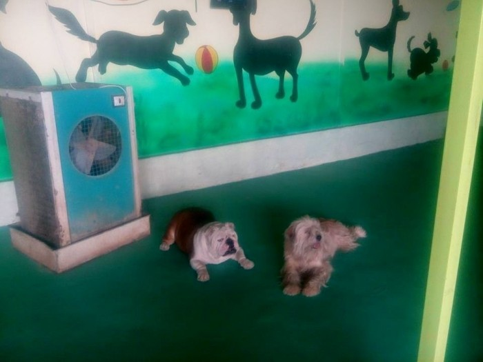 Dog Hostel In Pune