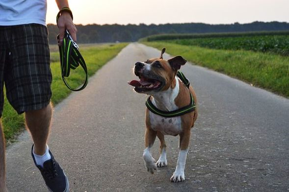 10 Benefits Of Having A Dog In Your Life