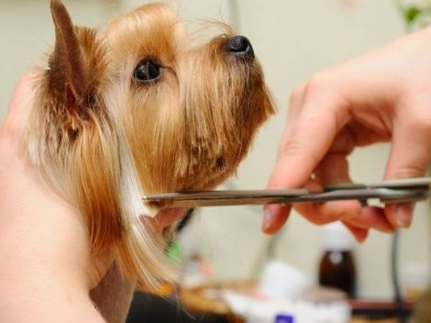 Dog Grooming: Why It Needs To Be Done Regularly