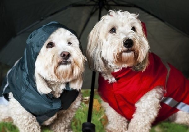 Dogs with raincoats
